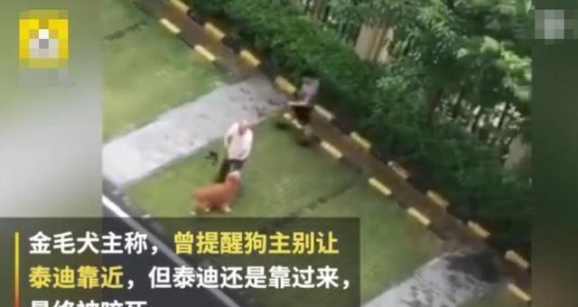 男子为狗报仇打死金毛犬 律师咨询:已涉嫌犯罪