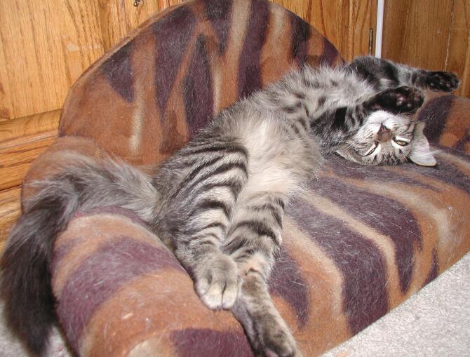 女子退猫失败后摔猫解气 曝光后将自证是爱猫者