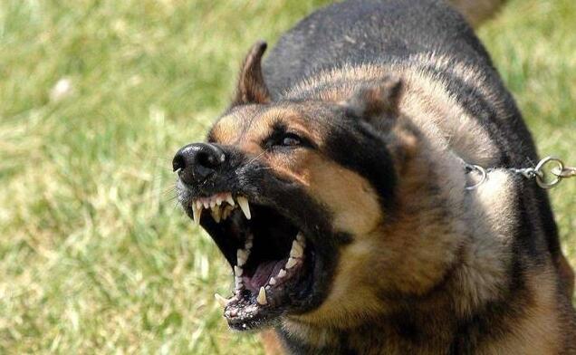 9岁女童上学路上遭恶狗咬伤身亡 律师咨询:狗主人或获刑