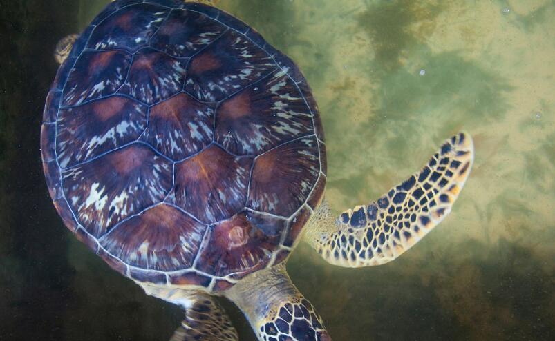 广州抓获顶风倒卖野生龟四男子 身后龟友圈浮出水面